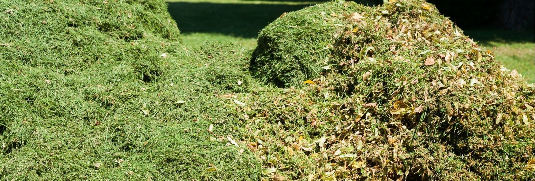 Gras _ bladeren